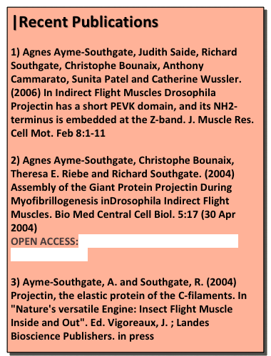 |Recent Publications
